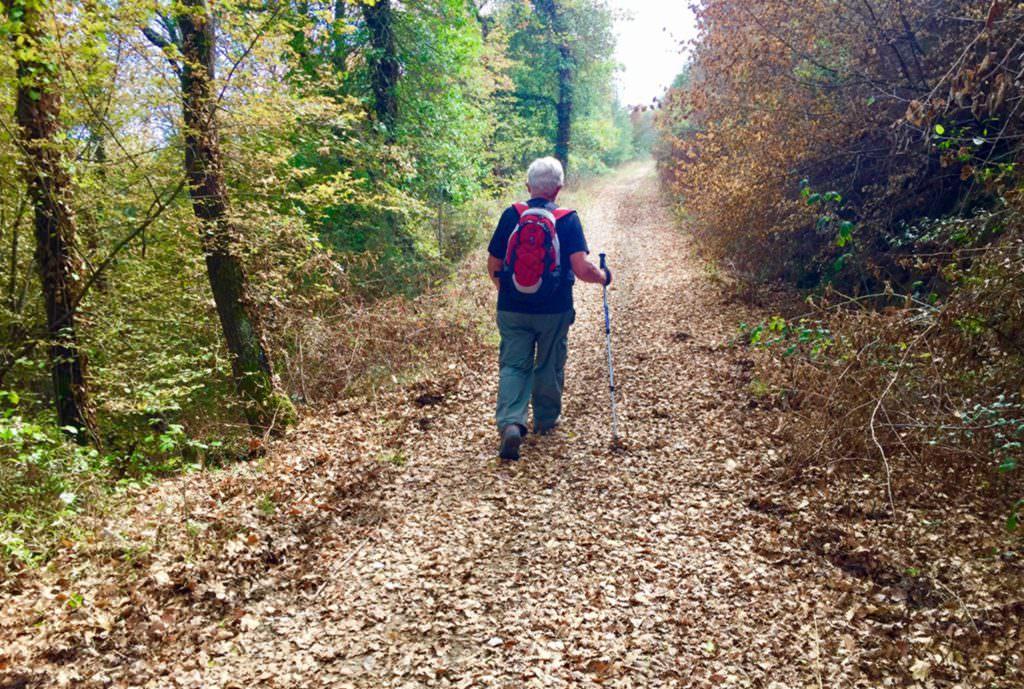 La via del Trasimeno seconda tappa in cammino nel bosco