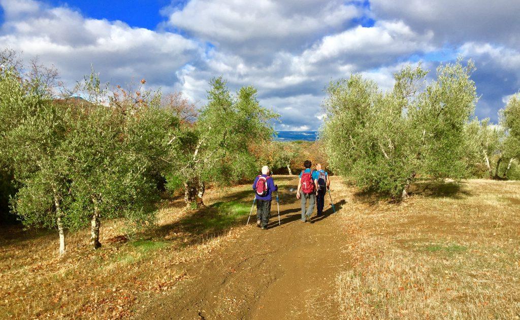 La Via del Trasimeno seconda tappa da San Savino a Panicale tra gli oliveti